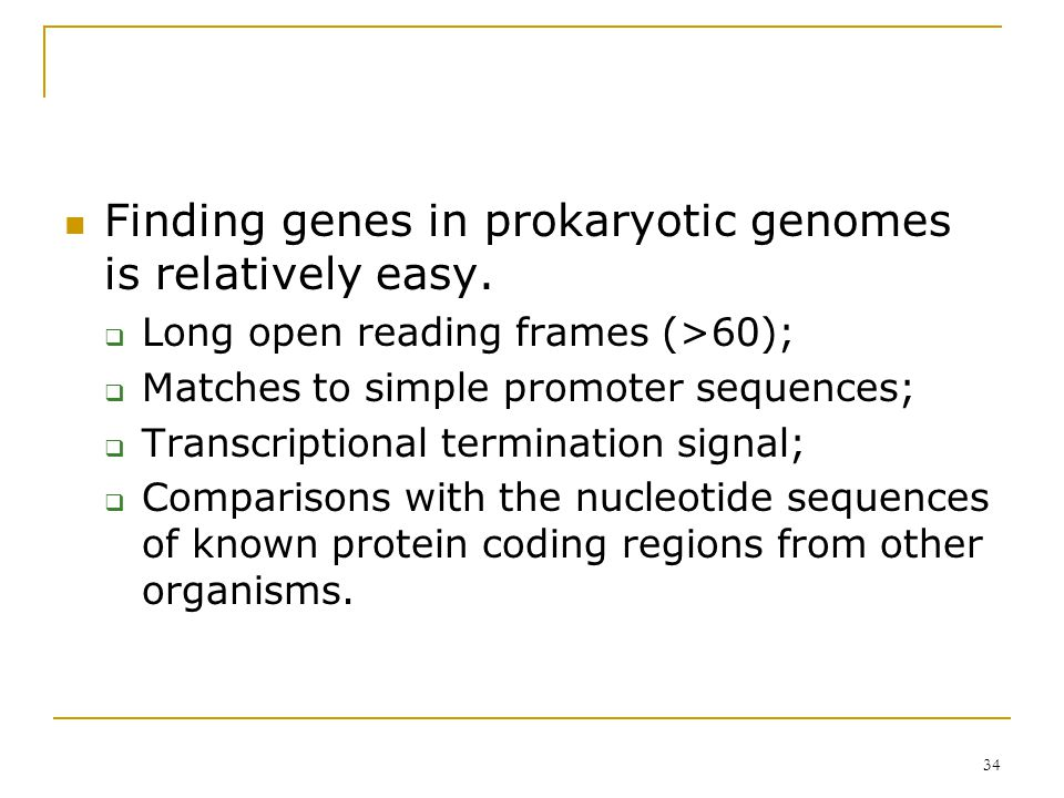 33 Prokaryotic Gene Density 85%~88% are associated with the coding regions E.