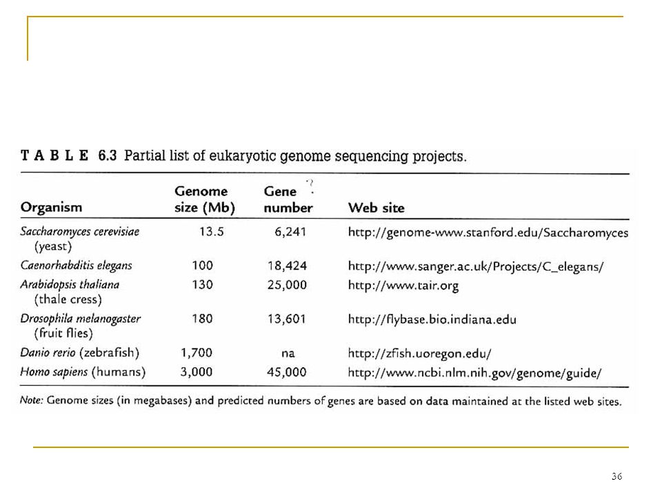 35 6.5 Eukaryotic Genomes Differences (to prokaryotic genomes)  Internal membrane-bound compartments allows them to maintain a wide variety of chemical environment.