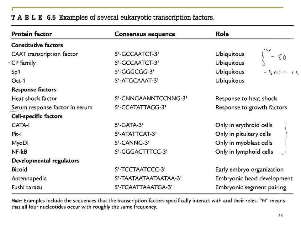 47 Transcription Factors constitutive  Do not respond to external signal. regulatory  Do respond to external signals. sequence-specific DNA-binding