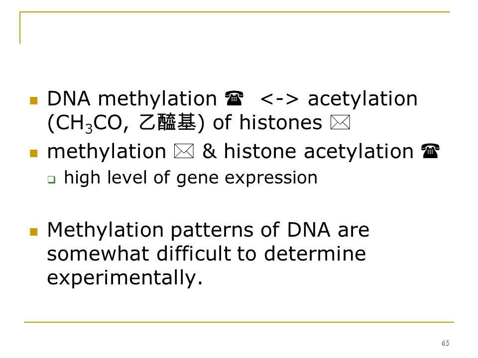 64 Methylation 甲基化 + CH 3 + oxidative deamination  Ċ  T  5'- ĊG -3'  5'- TG – 3'