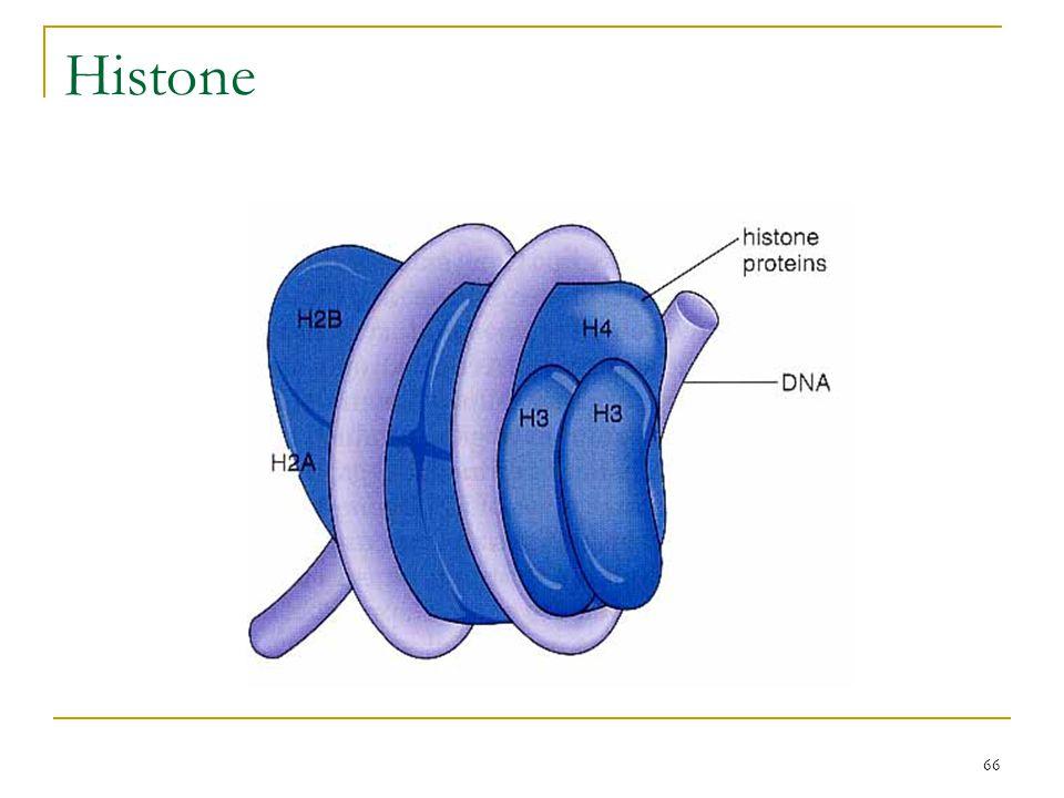 65 DNA methylation  acetylation (CH 3 CO, 乙醯基 ) of histones  methylation  & histone acetylation   high level of gene expression Methylation patte