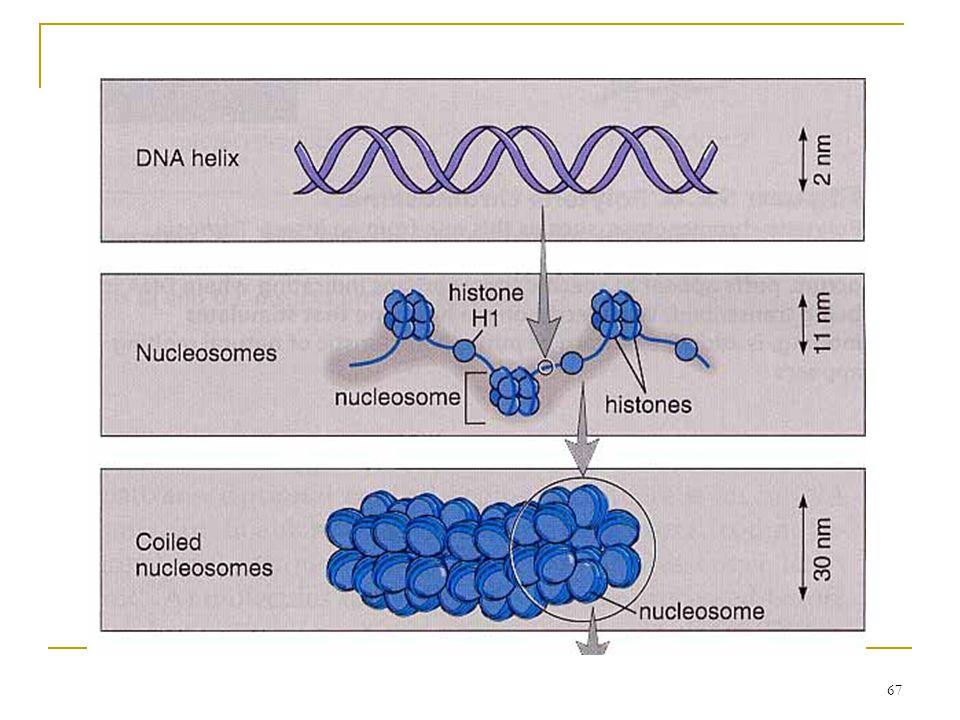 66 Histone