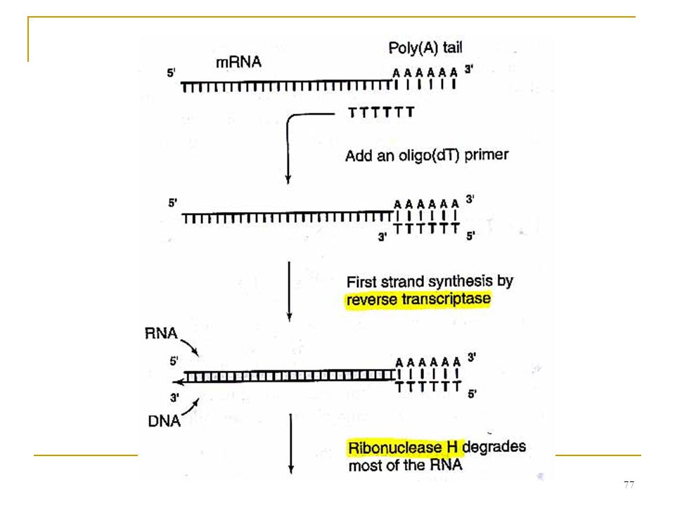 76 6.9.1 cDNAs and ESTs cDNA (complementary DNAs) cDNAs can be cloned into vectors and maintained as a cDNA library.