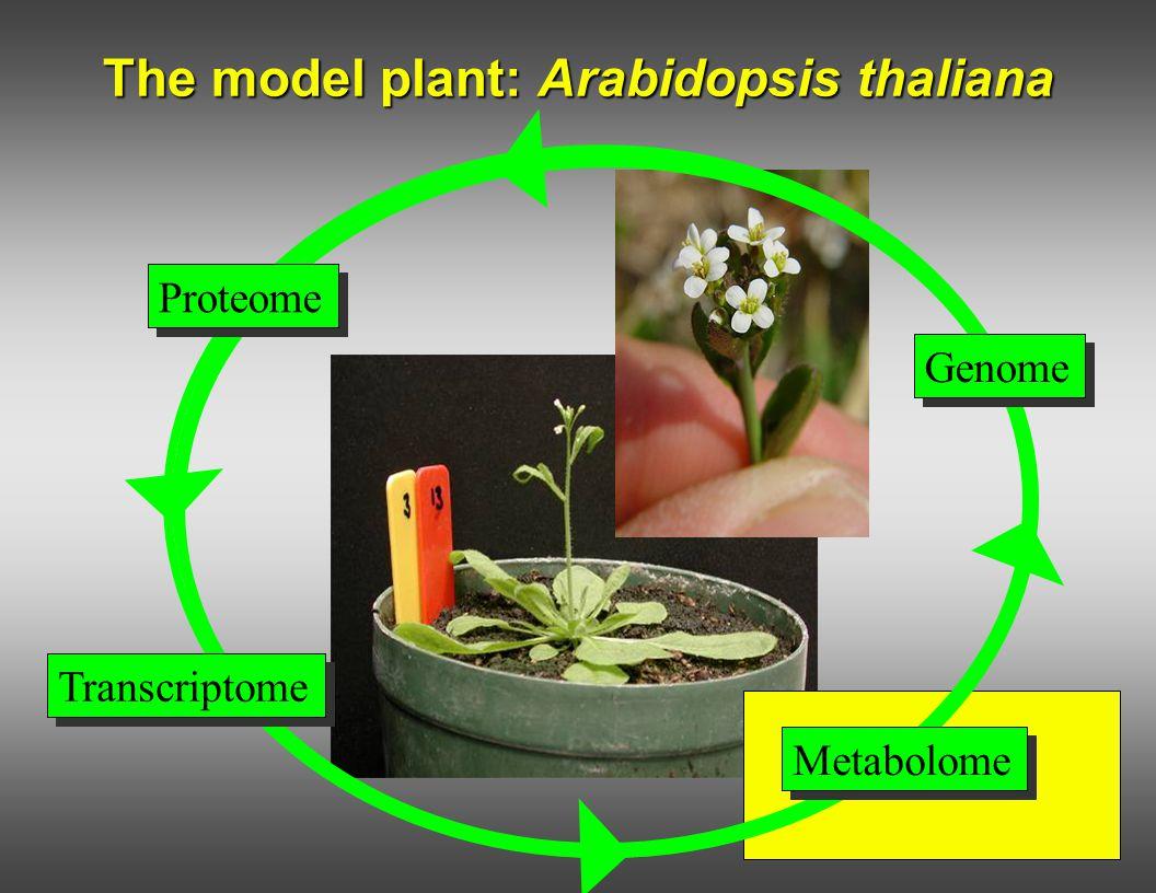 The model plant: Arabidopsis thaliana Genome Proteome Metabolome Transcriptome