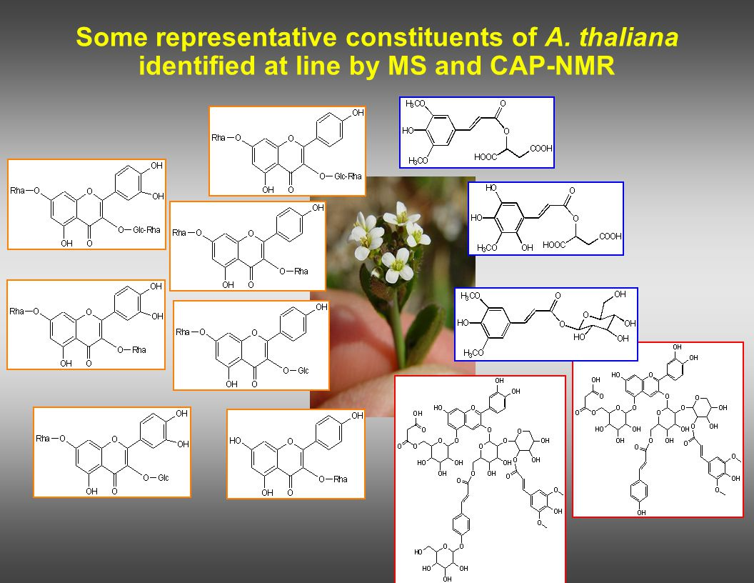 Some representative constituents of A. thaliana identified at line by MS and CAP-NMR