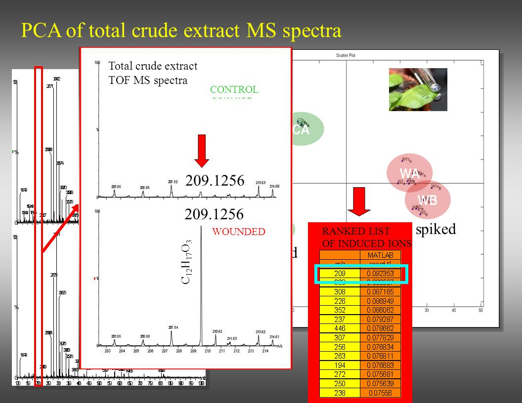 CONTROL WOUNDED PCA of total crude extract MS spectra spiked Total crude extract TOF MS spectra RANKED LIST OF INDUCED IONS Total crude extract TOF MS
