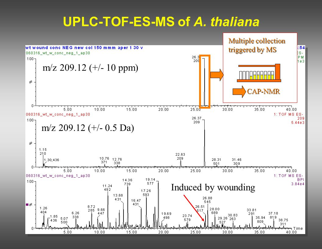 UPLC-TOF-ES-MS of A. thaliana Induced by wounding m/z 209.12 (+/- 10 ppm) m/z 209.12 (+/- 0.5 Da) CAP-NMR Multiple collection triggered by MS