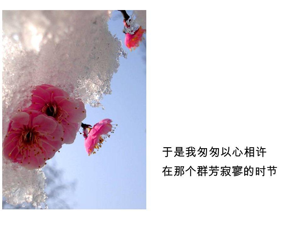 残冬飘来几片白雪 诗人说那是玉色蝴蝶