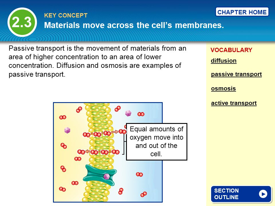 VOCABULARY KEY CONCEPT CHAPTER HOME Materials move across the cell's membranes.