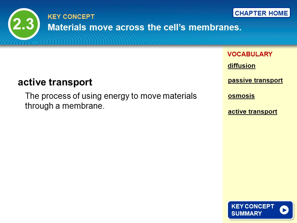 VOCABULARY KEY CONCEPT CHAPTER HOME The process of using energy to move materials through a membrane.