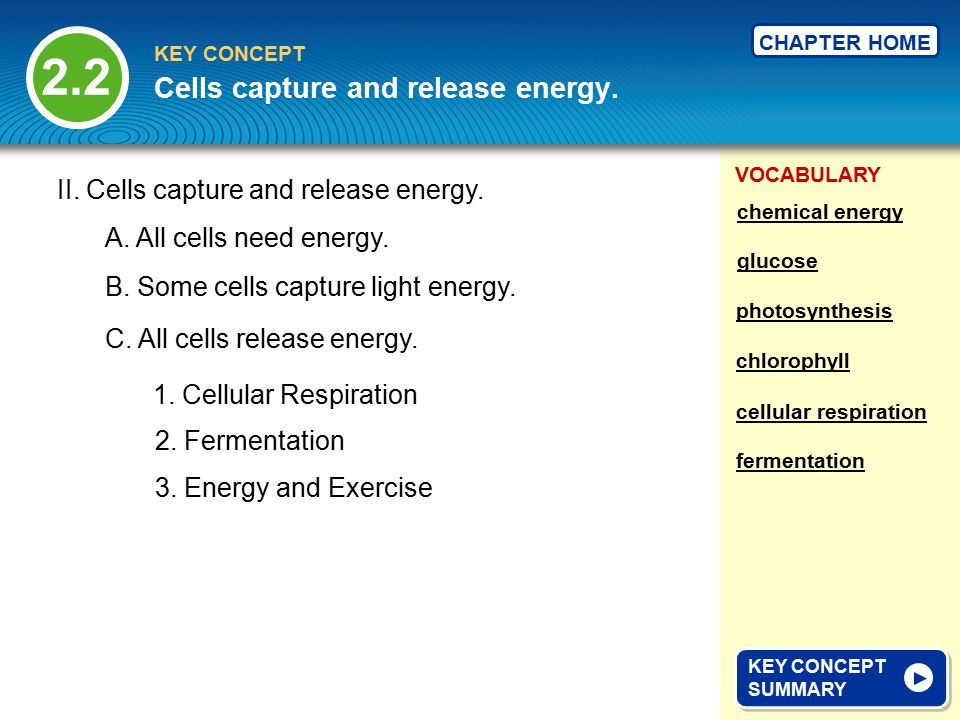 VOCABULARY KEY CONCEPT CHAPTER HOME 2.2 KEY CONCEPT SUMMARY KEY CONCEPT SUMMARY Cells capture and release energy.