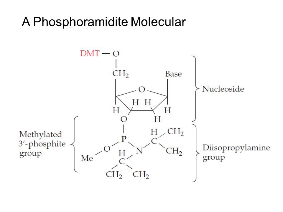 9 An anhydrous reagent (acetonitrile) Argon Trichloroacetic acid (TCA) (Detritylation) Acetonitrile Argon