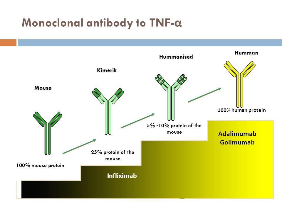 Monoclonal antibody to TNF- α Adalimumab (Adalimumab) Humman Mouse Kimerik Hummanised 5% -10% protein of the mouse 100% human protein 25% protein of t