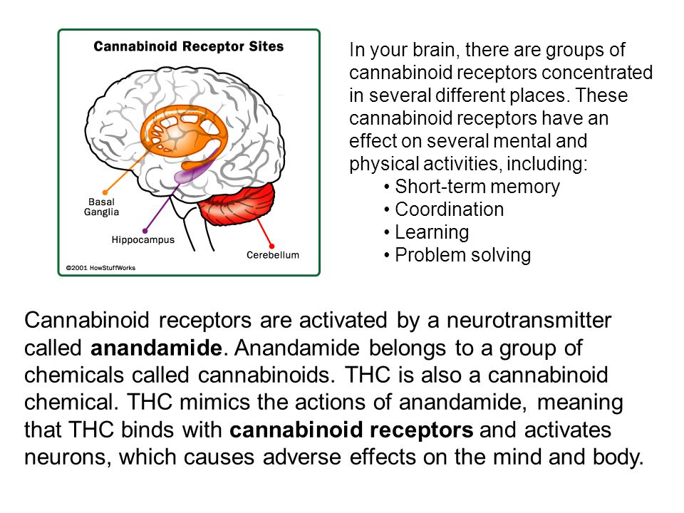 Cannabinoid receptors are activated by a neurotransmitter called anandamide. Anandamide belongs to a group of chemicals called cannabinoids. THC is al