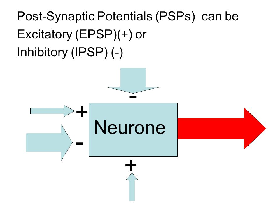 Post-Synaptic Potentials (PSPs) can be Excitatory (EPSP)(+) or Inhibitory (IPSP) (-) + + - - Neurone