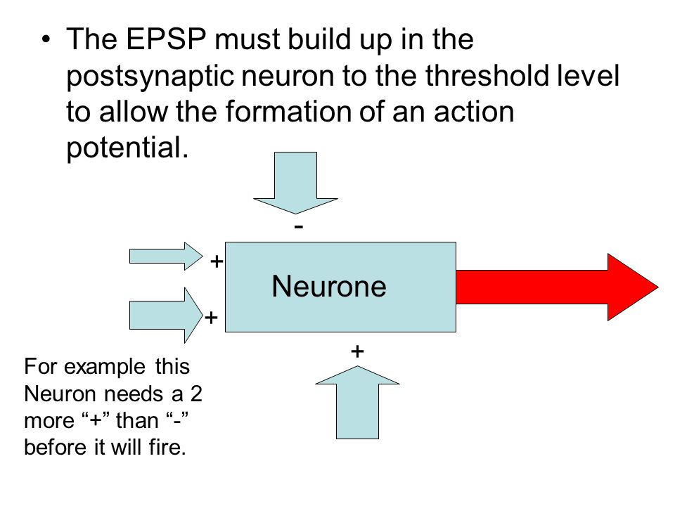 The EPSP must build up in the postsynaptic neuron to the threshold level to allow the formation of an action potential. Neurone + + + - For example th