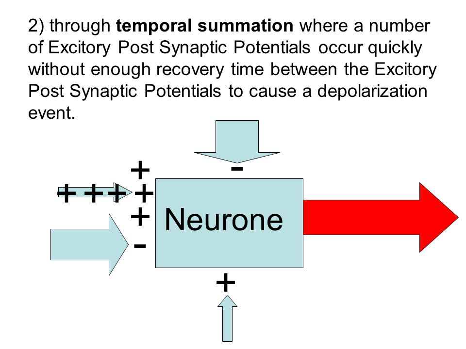 + + - - + + +++ 2) through temporal summation where a number of Excitory Post Synaptic Potentials occur quickly without enough recovery time between t