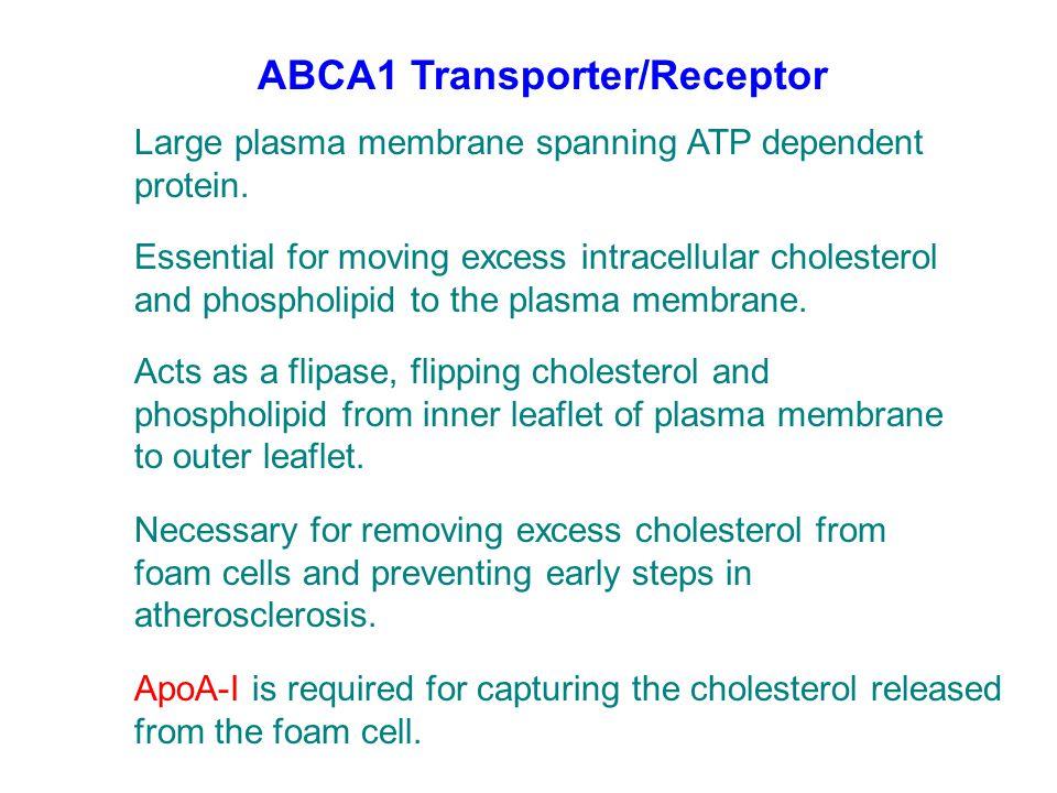 ABCA1 Transporter/Receptor Large plasma membrane spanning ATP dependent protein. Essential for moving excess intracellular cholesterol and phospholipi