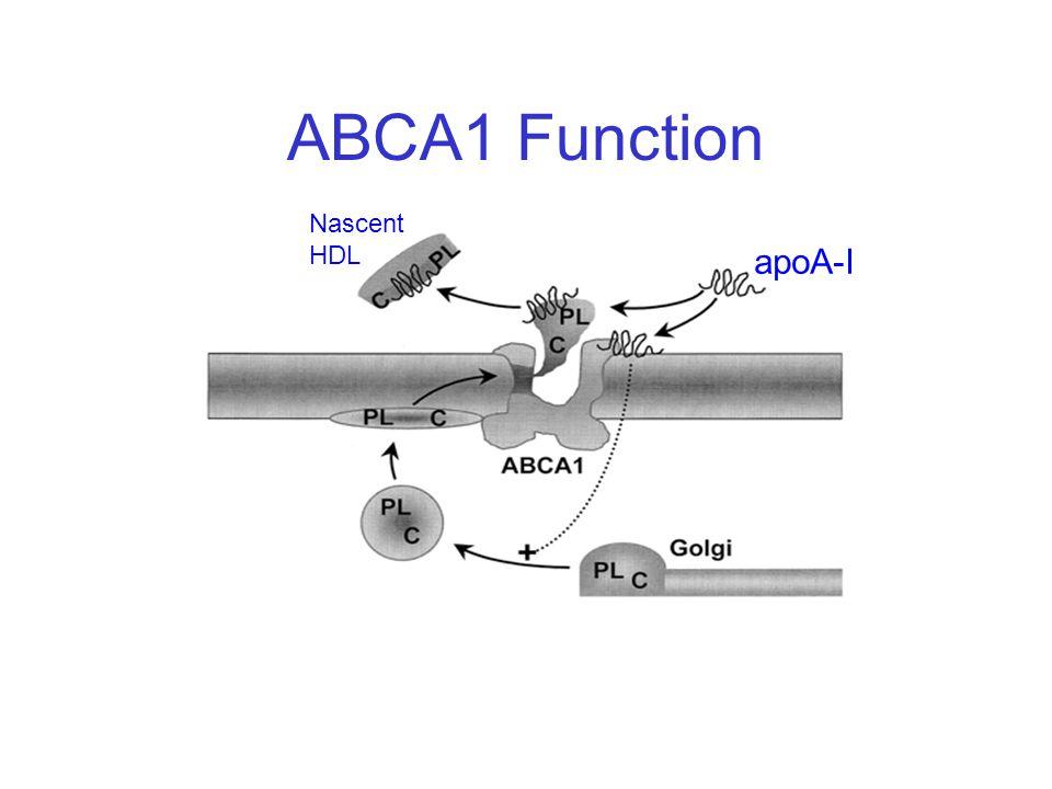 ABCA1 Function apoA-I Nascent HDL