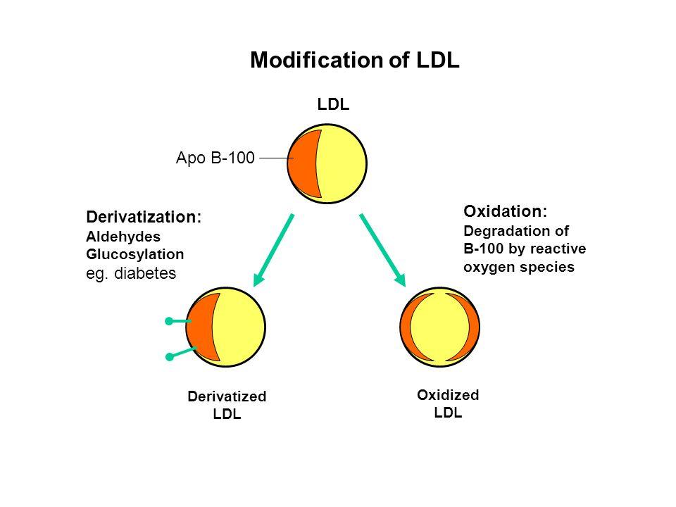 Modification of LDL LDL Apo B-100 Derivatization: Aldehydes Glucosylation eg. diabetes Oxidation: Degradation of B-100 by reactive oxygen species Deri