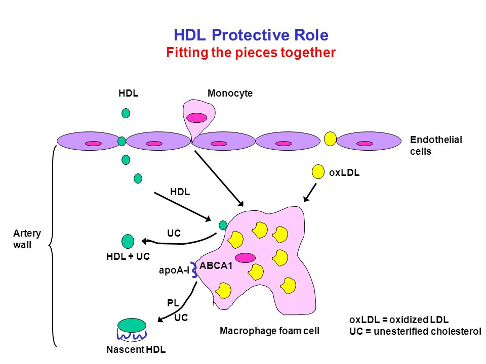 HDL Protective Role Fitting the pieces together oxLDL = oxidized LDL UC = unesterified cholesterol ABCA1 apoA-I Endothelial cells HDL UC PL UC Nascent
