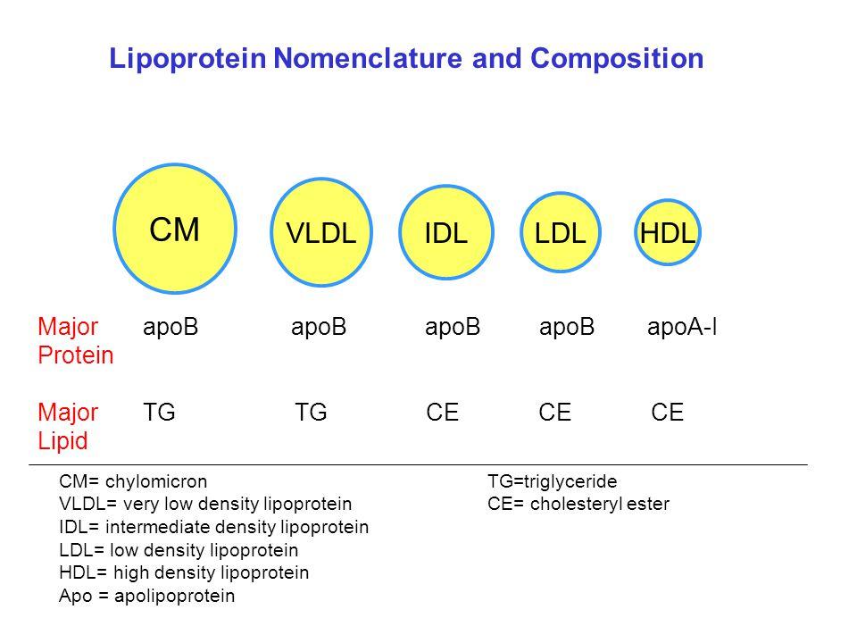 CM VLDL IDL LDL HDL Lipoprotein Nomenclature and Composition Major apoB apoB apoB apoB apoA-I Protein Major TGTG CE CE CE Lipid CM= chylomicronTG=trig