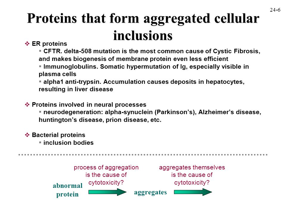 Proteins that form aggregated cellular inclusions  ER proteins  CFTR.