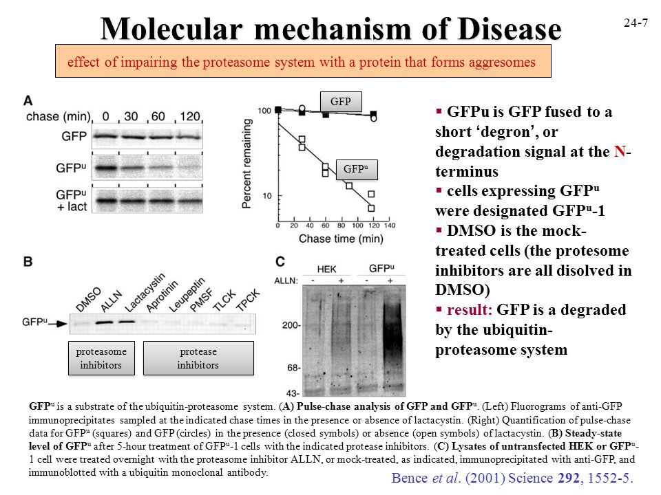 Molecular mechanism of Disease Bence et al. (2001) Science 292, 1552-5.