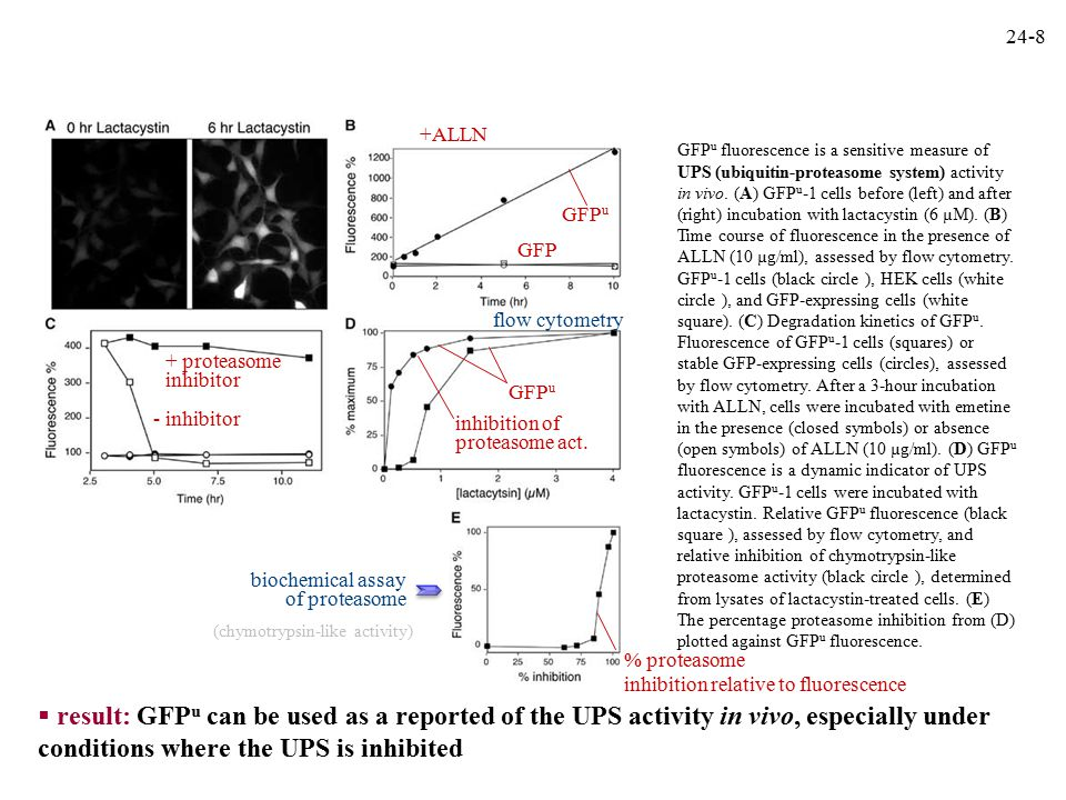 GFP u fluorescence is a sensitive measure of UPS (ubiquitin-proteasome system) activity in vivo.