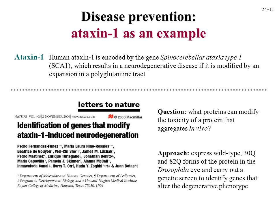 Disease prevention: ataxin-1 as an example Ataxin-1 Human ataxin-1 is encoded by the gene Spinocerebellar ataxia type 1 (SCA1), which results in a neurodegenerative disease if it is modified by an expansion in a polyglutamine tract Question: what proteins can modify the toxicity of a protein that aggregates in vivo.