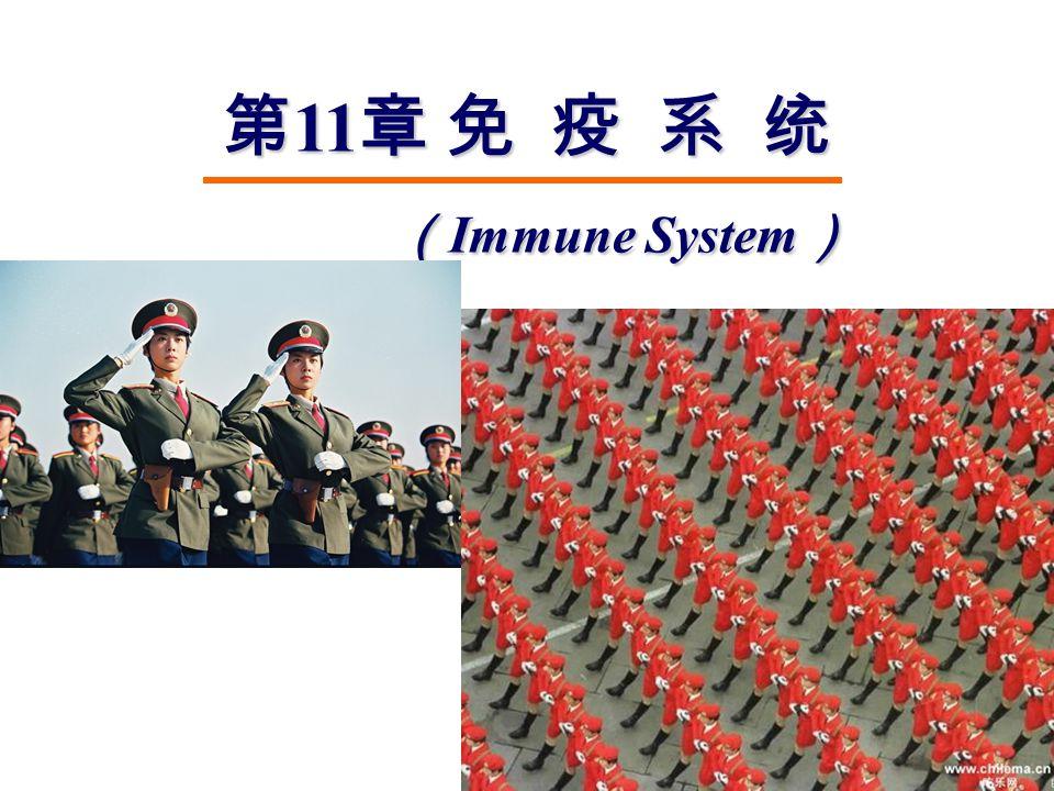 第 11 章 免 疫 系 统 ( Immune System ) ( Immune System )