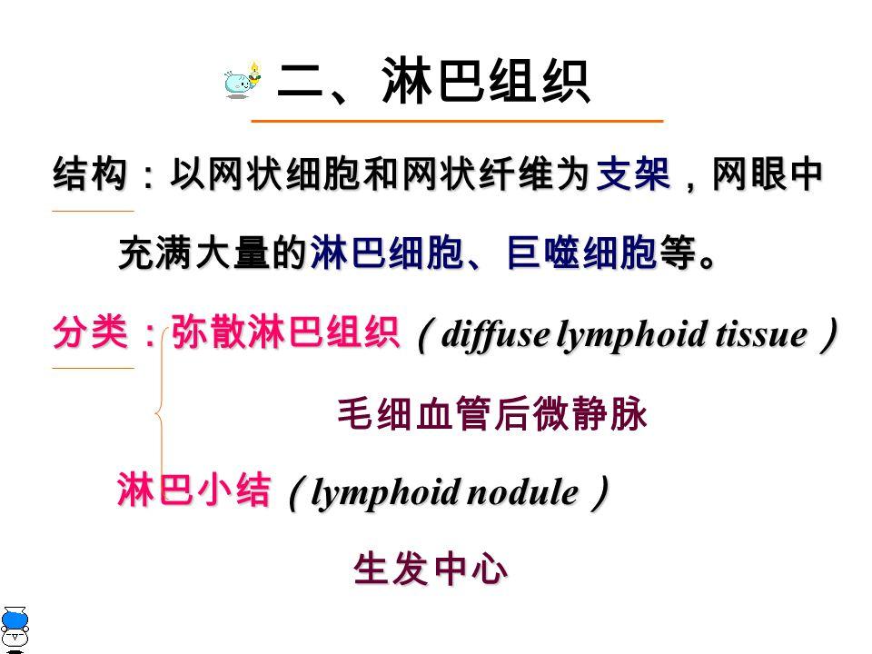 二、淋巴组织 结构:以网状细胞和网状纤维为支架,网眼中 充满大量的淋巴细胞、巨噬细胞等。 充满大量的淋巴细胞、巨噬细胞等。 分类:弥散淋巴组织( diffuse lymphoid tissue ) 淋巴小结( lymphoid nodule ) 淋巴小结( lymphoid nodule ) 生发中心 生发中心 毛细血管后微静脉