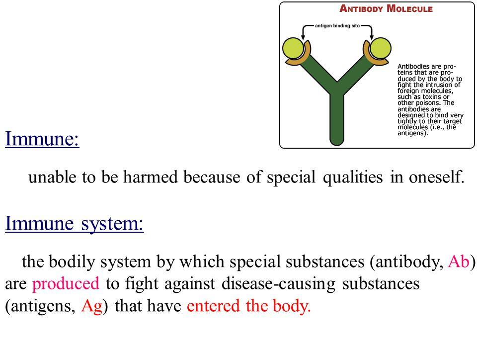 间质 被膜 → 小叶间隔 间质 被膜 → 小叶间隔 实质: 实质: 皮质: 皮质: 髓质: 髓质: 胸腺结构 1.
