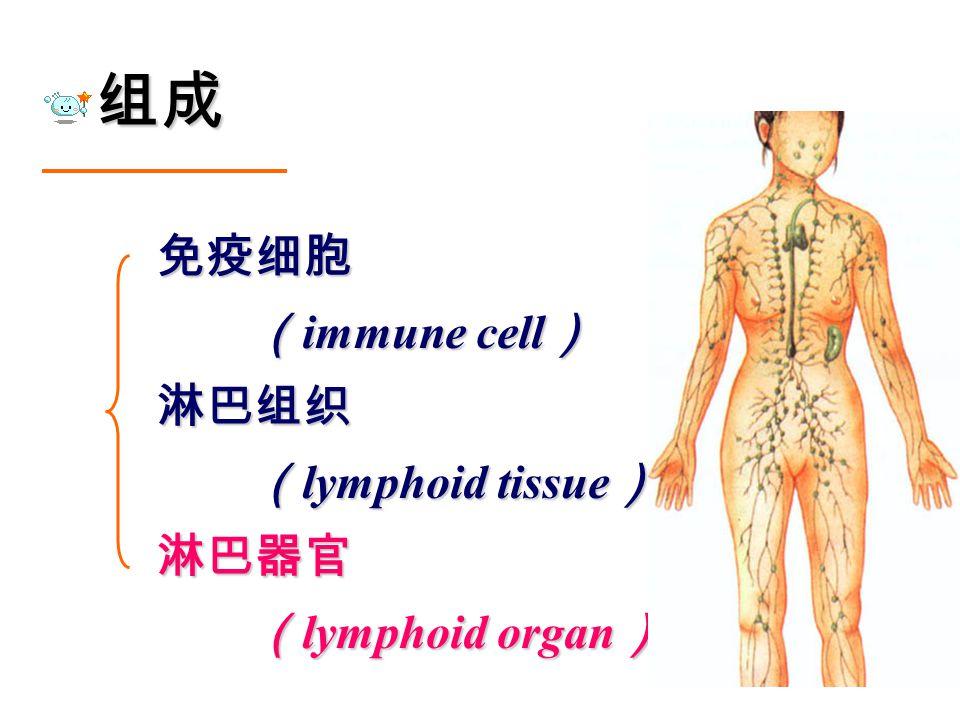 组成 免疫细胞 ( immune cell ) ( immune cell )淋巴组织 ( lymphoid tissue ) ( lymphoid tissue )淋巴器官 ( lymphoid organ ) ( lymphoid organ )