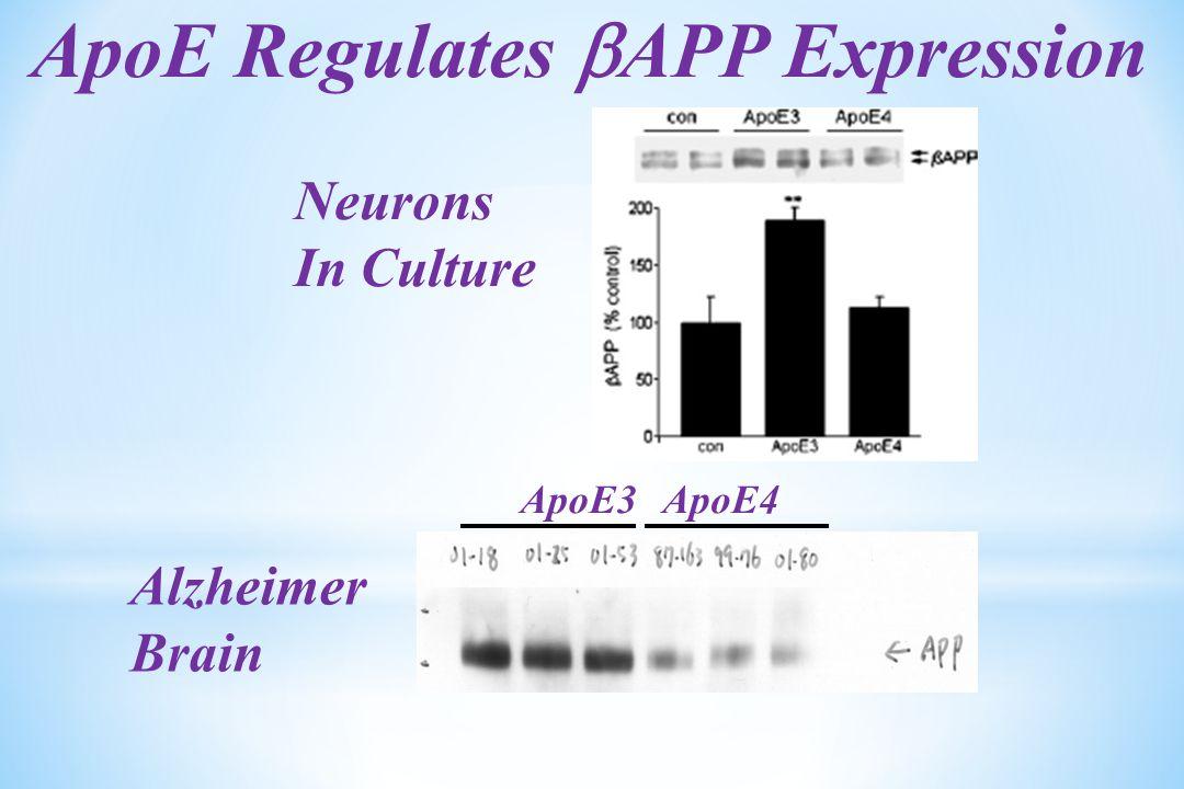ApoE Regulates  APP Expression Neurons In Culture ApoE3ApoE4 Alzheimer Brain