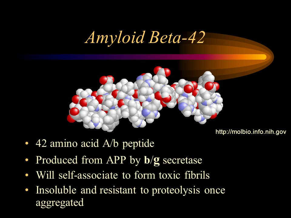 Amyloid Beta-42 42 amino acid A/b peptide Produced from APP by b/ g secretase Will self-associate to form toxic fibrils Insoluble and resistant to proteolysis once aggregated http://molbio.info.nih.gov