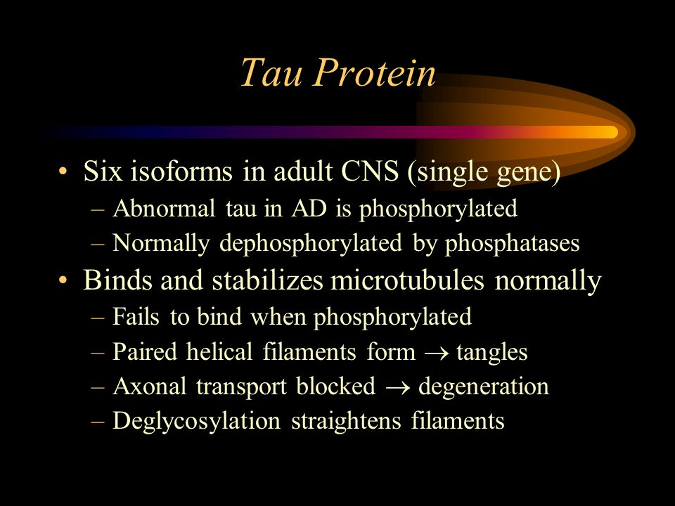 Tau Protein Six isoforms in adult CNS (single gene) –Abnormal tau in AD is phosphorylated –Normally dephosphorylated by phosphatases Binds and stabilizes microtubules normally –Fails to bind when phosphorylated –Paired helical filaments form  tangles –Axonal transport blocked  degeneration –Deglycosylation straightens filaments