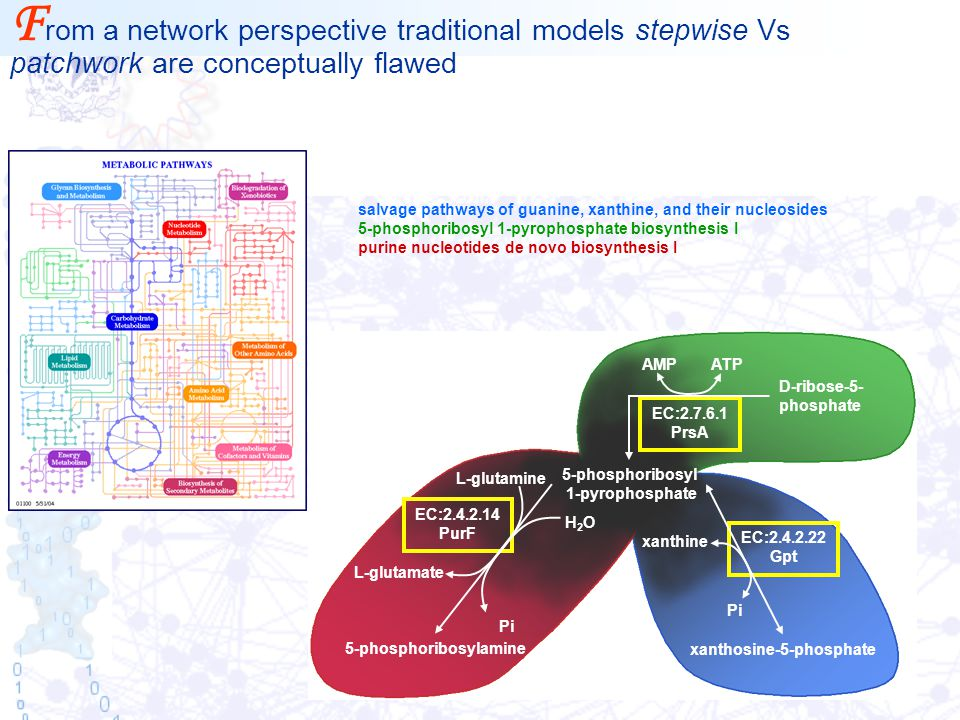 F rom a network perspective traditional models stepwise Vs patchwork are conceptually flawed EC:2.4.2.14 PurF EC:2.7.6.1 PrsA ATPAMP 5-phosphoribosyla