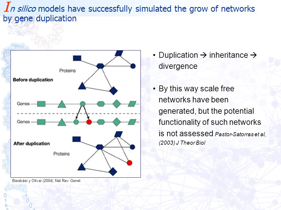Barabási y Oltvai (2004) Nat Rev Genet Duplication  inheritance  divergence By this way scale free networks have been generated, but the potential functionality of such networks is not assessed Pastor-Satorras et al, (2003) J Theor Biol I n silico models have successfully simulated the grow of networks by gene duplication