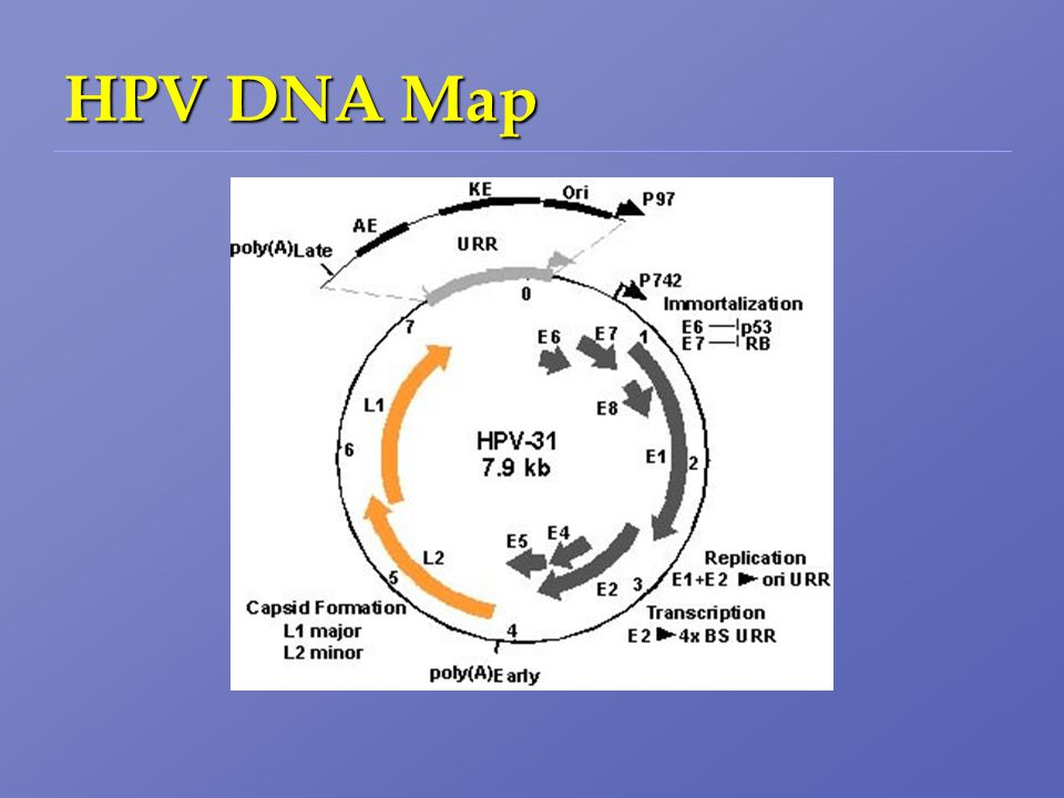 HPV DNA Map