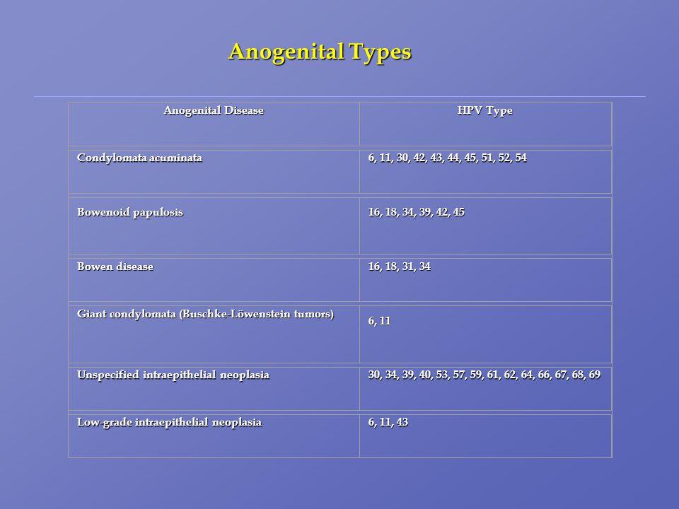 Anogenital Disease HPV Type Condylomata acuminata 6, 11, 30, 42, 43, 44, 45, 51, 52, 54 Bowenoid papulosis 16, 18, 34, 39, 42, 45 Bowen disease 16, 18, 31, 34 Giant condylomata (Buschke-Löwenstein tumors) 6, 11 Unspecified intraepithelial neoplasia 30, 34, 39, 40, 53, 57, 59, 61, 62, 64, 66, 67, 68, 69 Low-grade intraepithelial neoplasia 6, 11, 43 Anogenital Types