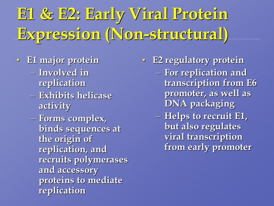 E1 & E2: Early Viral Protein Expression (Non-structural) E1 major protein E1 major protein – Involved in replication – Exhibits helicase activity – Forms complex, binds sequences at the origin of replication, and recruits polymerases and accessory proteins to mediate replication E2 regulatory protein E2 regulatory protein – For replication and transcription from E6 promoter, as well as DNA packaging – Helps to recruit E1, but also regulates viral transcription from early promoter