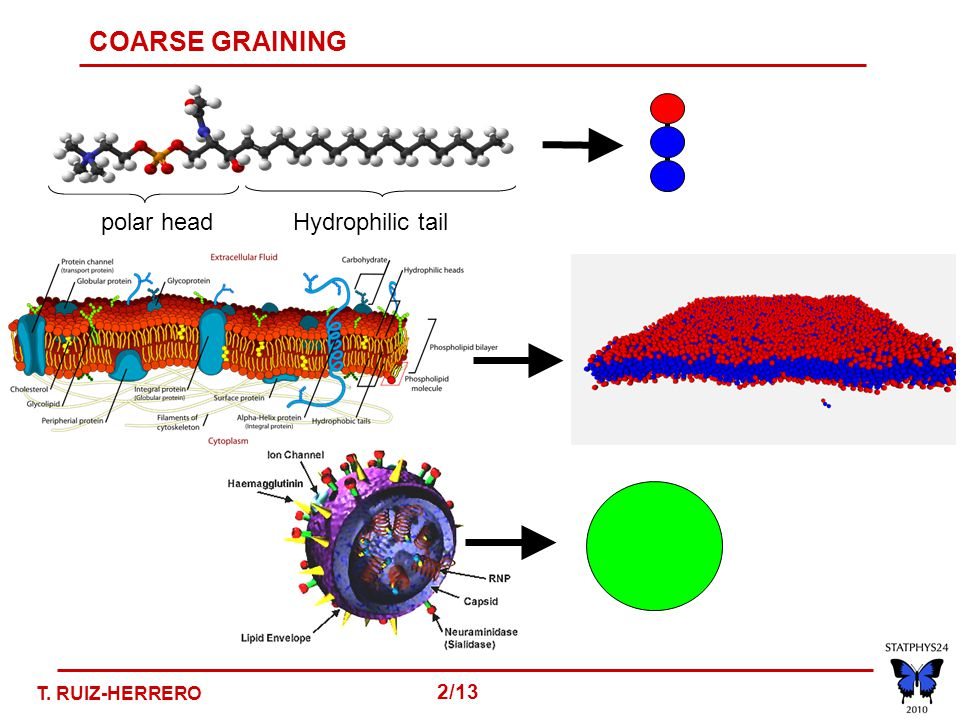 COARSE GRAINING polar headHydrophilic tail T. RUIZ-HERRERO 2/13