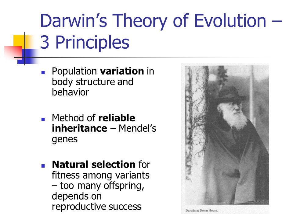 Darwin's Theory of Evolution – 3 Principles Population variation in body structure and behavior Method of reliable inheritance – Mendel's genes Natural selection for fitness among variants – too many offspring, depends on reproductive success