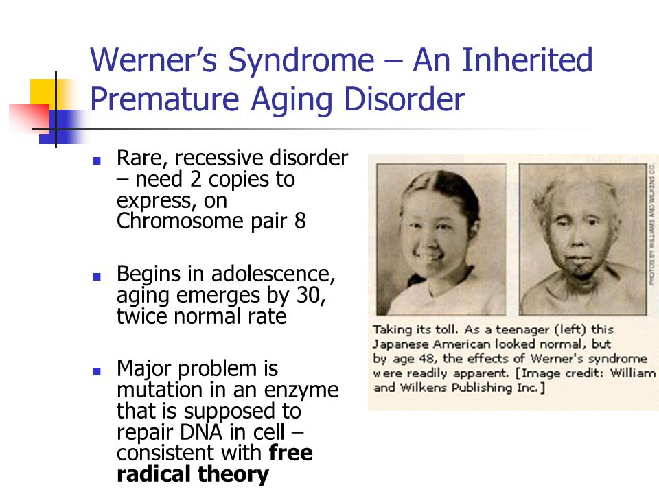 Werner's Syndrome – An Inherited Premature Aging Disorder Rare, recessive disorder – need 2 copies to express, on Chromosome pair 8 Begins in adolescence, aging emerges by 30, twice normal rate Major problem is mutation in an enzyme that is supposed to repair DNA in cell – consistent with free radical theory