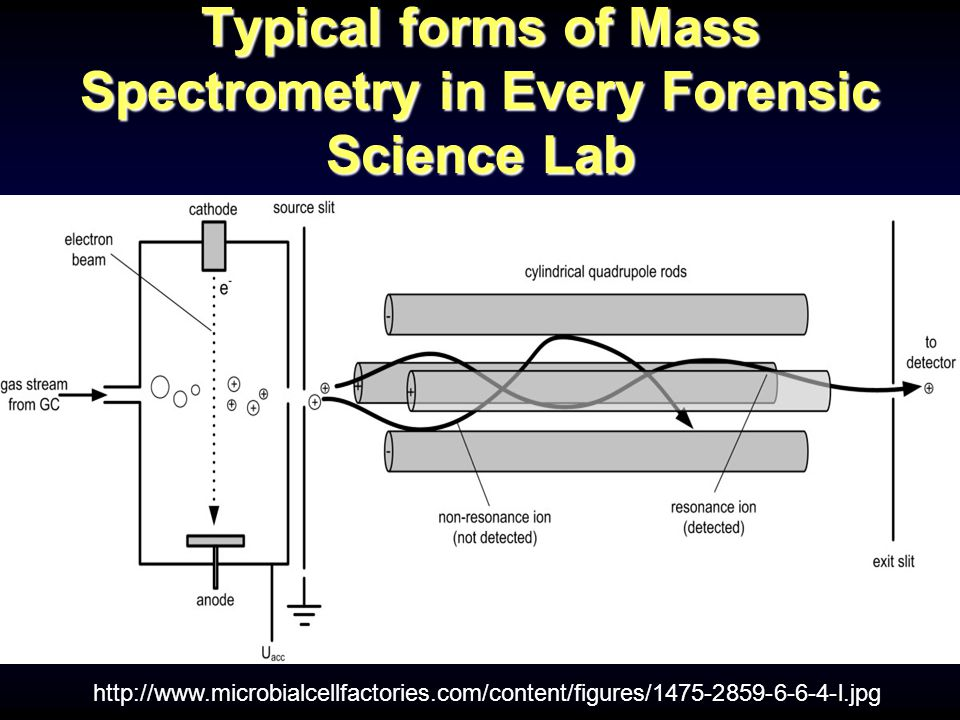 Typical forms of Mass Spectrometry in Every Forensic Science Lab Gas Chromatography-Mass Spectrometry (GC-MS) http://www.microbialcellfactories.com/content/figures/1475-2859-6-6-4-l.jpg