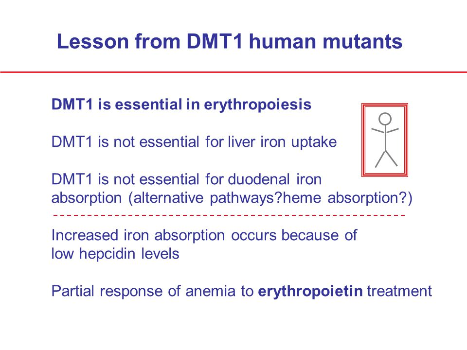 Lesson from DMT1 human mutants DMT1 is essential in erythropoiesis DMT1 is not essential for liver iron uptake DMT1 is not essential for duodenal iron absorption (alternative pathways?heme absorption?) Increased iron absorption occurs because of low hepcidin levels Partial response of anemia to erythropoietin treatment