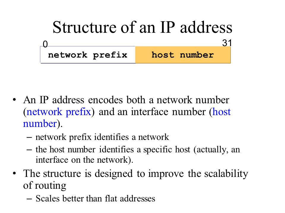 Structure of an IP address network prefixhost number An IP address encodes both a network number (network prefix) and an interface number (host number