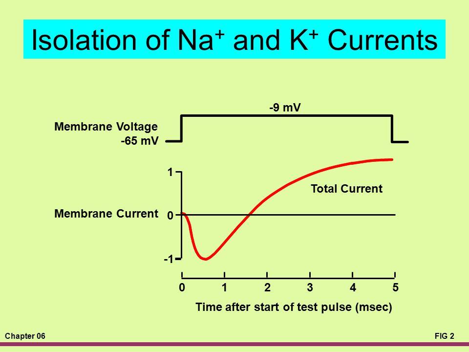 Chapter 06FIG 2 Isolation of Na + and K + Currents -9 mV -65 mV Time after start of test pulse (msec) 012345 1 0 Membrane Voltage Membrane Current Tot