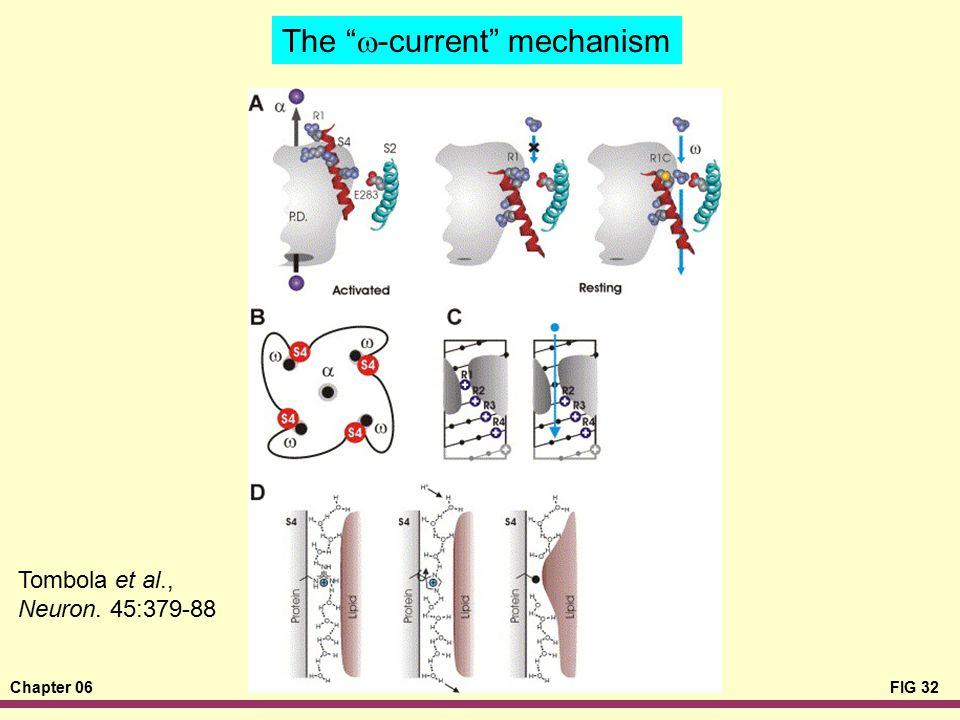 "Chapter 06FIG 32 The ""  -current"" mechanism Tombola et al., Neuron. 45:379-88"